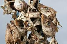 STOCKFISH HEAD