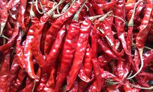 Hot dried chilli pepper for sale