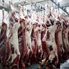 Grade Frozen Beef Meat Beef Carcass For Sale