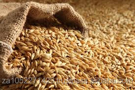 Barley 100% Special sales/Best quality/ competitive price /fast delivery time /wholesale supply.
