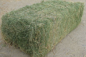 Good Quality Animal Feed Alfalfa Hay