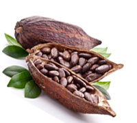 Cocoa/ Cacao/ Chocolate bean seeds