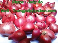 VIETNAM RED / PURPLE ONION