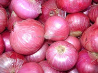 Wholesale fresh red onion direct from farm / warehouse