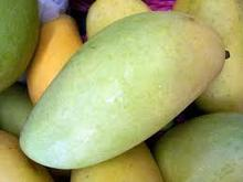 Best quality mango fruits