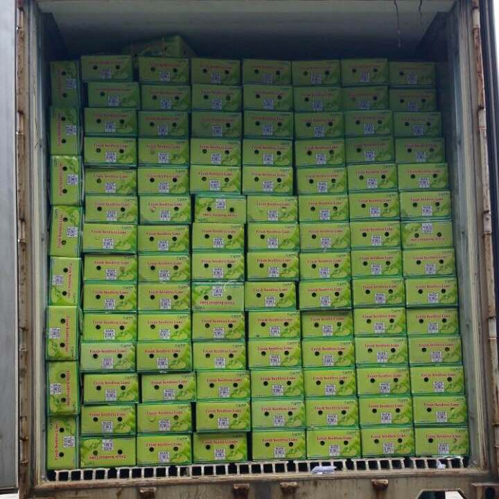 VIETNAM FRESH SEEDLESS LIME (high quality with good price at farm) (Tel: +84982133312)