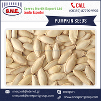 Best Selling Lady Nail Pumpkin Seed at Very Reasonable Price