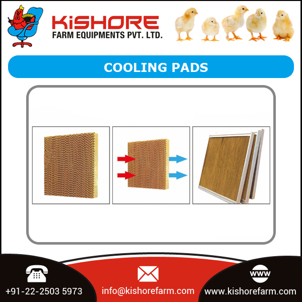 High Quality Exhaust Fan/Cooling Pad/Air Inlet/Poultry House