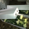 Fresh Cut Roses Available
