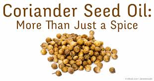 coriander seed UKRAINE -New crop