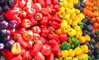 FRESH GREEN, RED, YELLOW PEPPER / BELL PEPPER / HABANERO PEPPER/ CHILLI