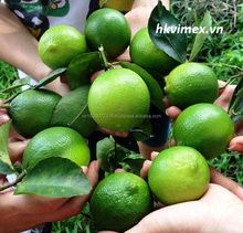 Great Product: import-export lemons seedless from viet nam ,best price