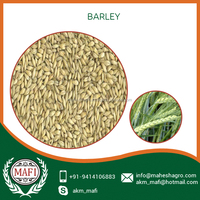 New Arrival Stock Barley at Affordable Price in India Market