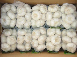 Top quality Natural Garlic Reliable Price Fresh Red Garlic For Sale
