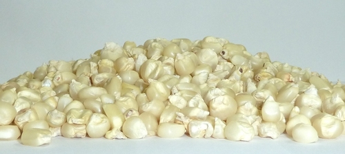 Non GMO White Maize - Non GMO Yellow Maize