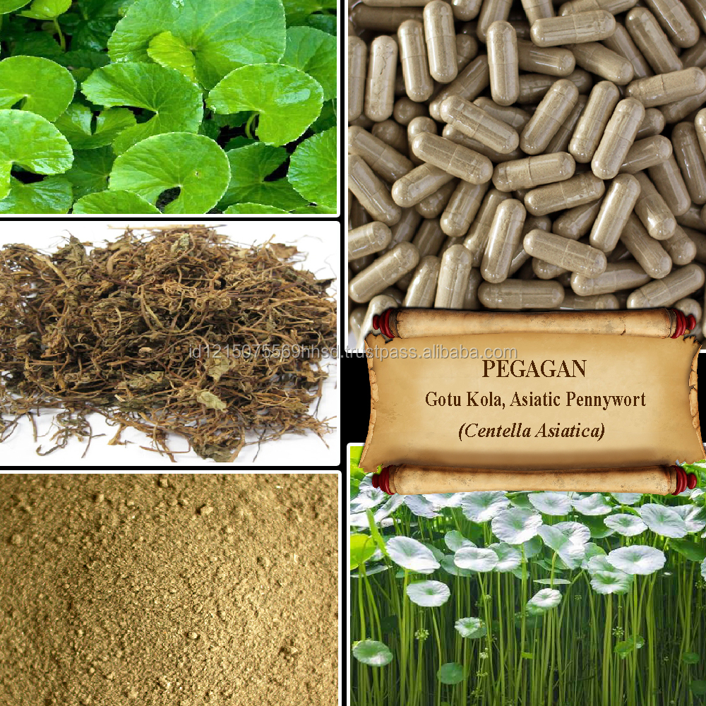 [ORGANIC] Gotu Kola / Asiatic Pennywort / Centella Asiatica / Fresh Powder, Extract, Capsules, Liquid, Oil