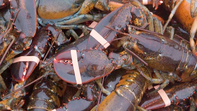 Lobster from Thai Supplier