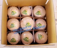 FRESH SWEET COCONUT YOUNG + 84 963818434 whatsapp