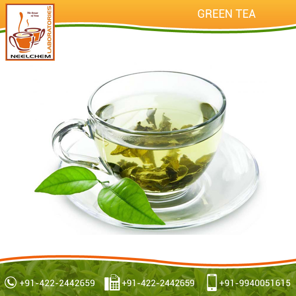 Superior Quality Organic Green Tea at Factory Price