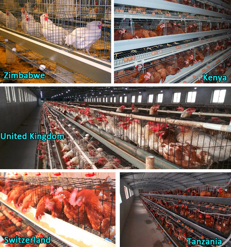 Hot selling Africa chicken cage for sale automatic chicken layer cage for sale in philippines