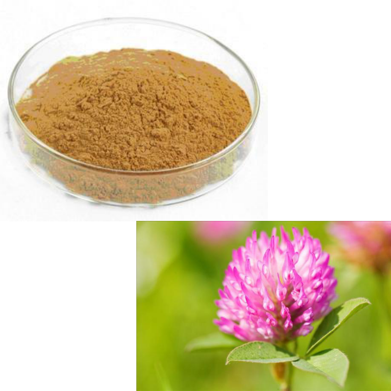 GMP Top Quality 10:1 Red Clover Powder Red Clover Powder Extract