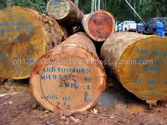 Timber Wood Logs , Plywood Timber Wood,Acacia Timber Wood for Sale