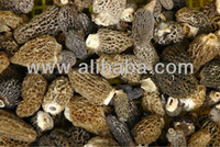 Dried Morel Mushroom /Morchella Conica