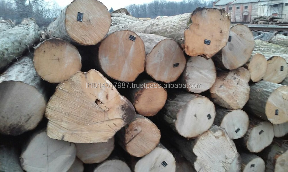 HORNBEAM LOGS FROM UKRAINE (Carpinus betulus)