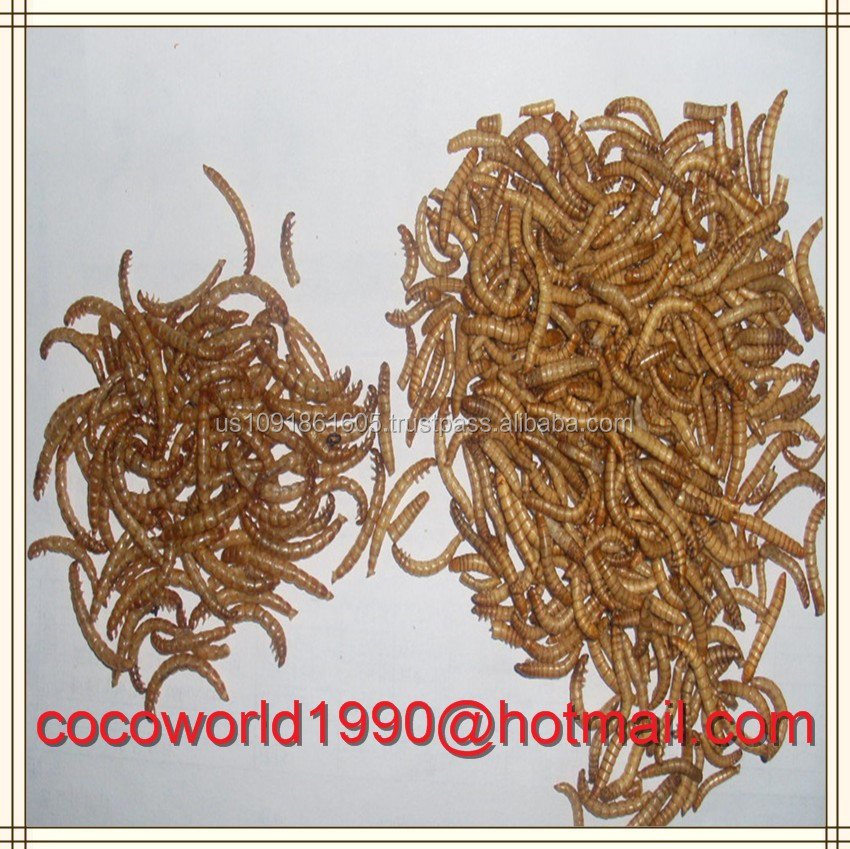 pet food/chicken feed/Dried Mealworm For Sale