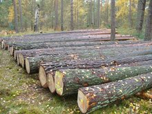 RUSSIAN Timber Log / Sawlogs /Wood round logs / lumber /PINE / SPRUCE /