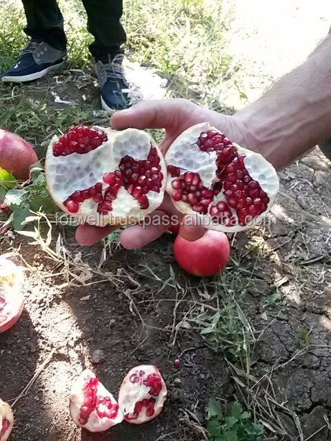 fresh fruit pomegranate from egypt