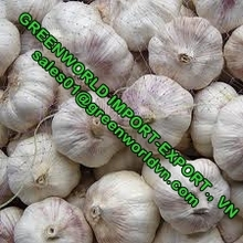 FRESH GARLIC WITH HIGH QUALITY AND BEST PRICE FOR SALE