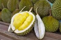 Fresh Durian fruits for sale