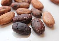 Roasted Criollo Cocoa Beans / Raw Dried Cacoa Beans