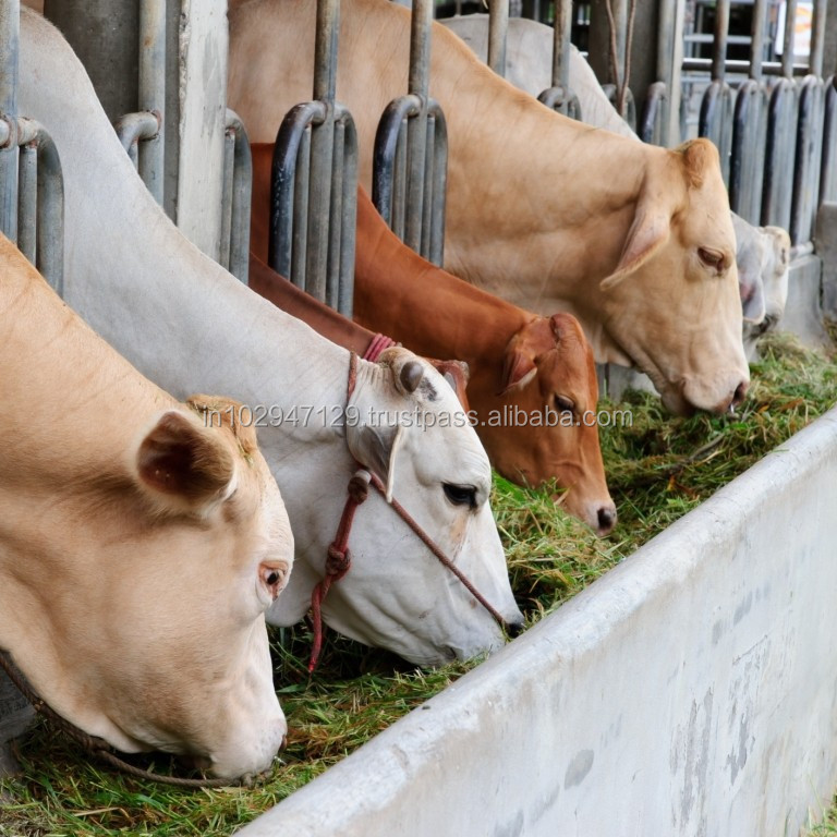 Feed Probiotic for Successful dairy Farming in Kenya