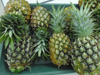 MD2, Queen and Cayen, fresh Pineapple