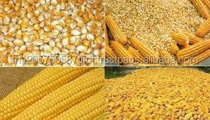 Best Quality Wheat Bran, Corn Gluten Meal and Yellow Corn for sell
