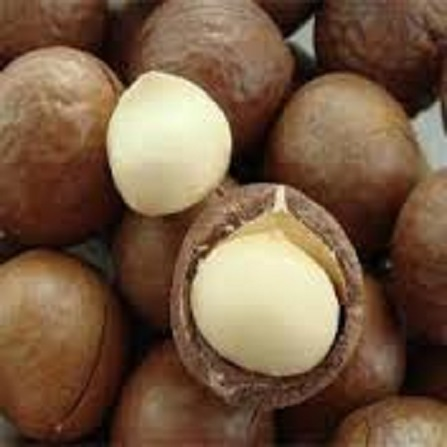 Macadamia Nuts Raw Macadamia Nuts Small & Large Orders for sale