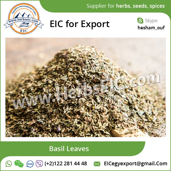 Quality Certified Dried Basil Leaves Available at Bulk Price