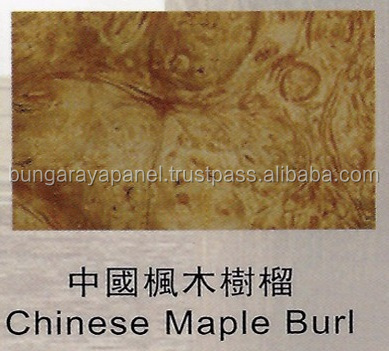 Special Species - Chinese Maple Burl