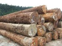 african hard wood logs