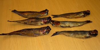 Canadian Salted Smoked Herring FISH Distributor and Exporter .