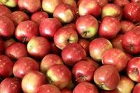 New arrival Fresh Idared apples