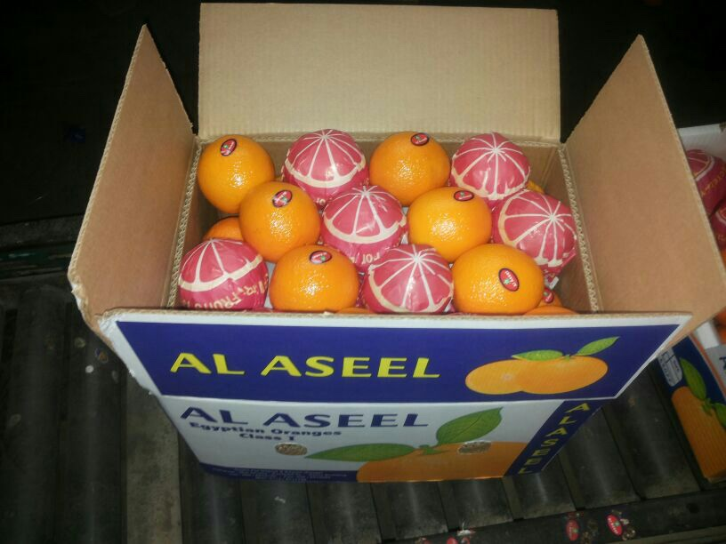 navel orange so cheap price hot selling