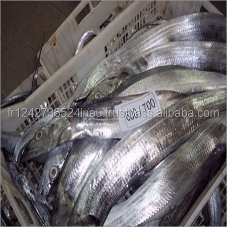 Fresh and Frozen Ribbon Fish forsale at low rate