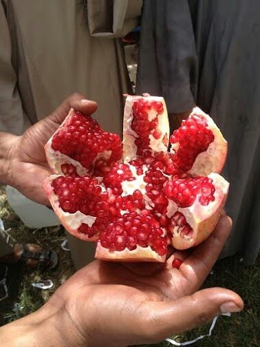 fresh egyptian pomegranate high quality A