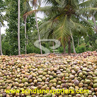 Exporters of Fresh Semi Husked Coconut