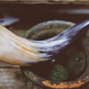 Viking Drinking Horn Natural Unique Drinking