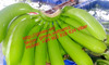 FRESH CAVENDISH BANANA IN Vietnam 2015