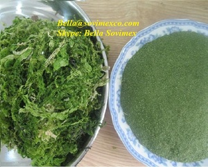 High Quality_Dried Seaweed Green Ulva